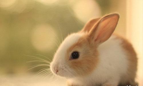 小兔挑食作文三年级作文挑食的小白兔小兔过生日作文