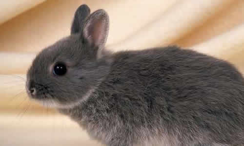 两只可爱的小兔图片