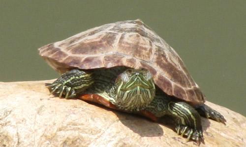 买了一只小乌龟,不进食该怎么办?