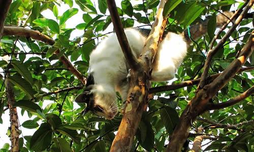 的小猫作文60字小猫爬树