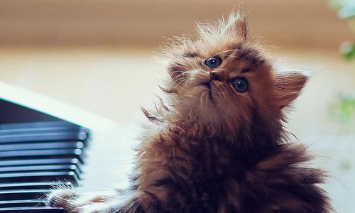 小猫的作文90字