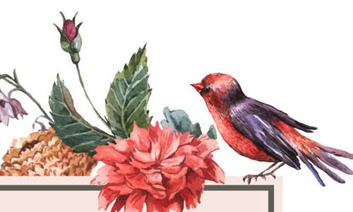 小鸟和玫瑰花的作文