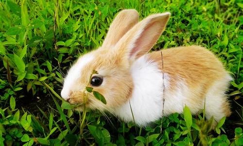 小兔子的作文900字