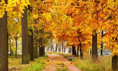 写秋天风景的作文100字图片