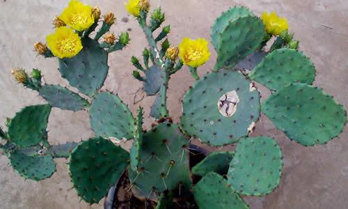 """妈妈耐心地解释:""""仙人掌是长在沙漠里的植物,他们有着储藏水分的特殊"""