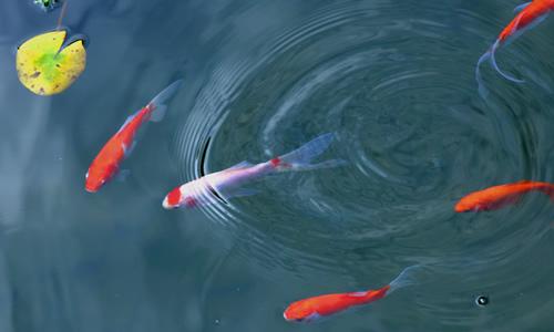 小鱼求带走作文
