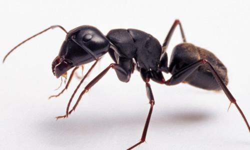 写作文的a作文蚂蚁蚂蚁专家吴志成图片