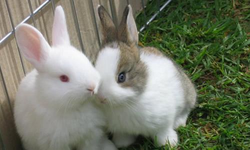 写小兔子的作文二年级