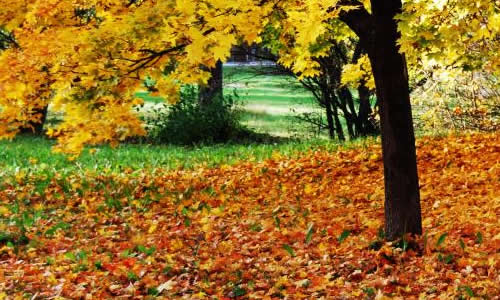 写秋天落叶的作文500字