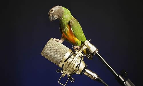 动物唱歌表演节目