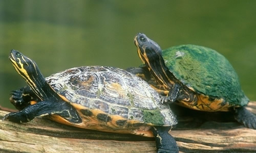 一只可爱的小乌龟