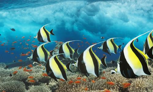 关于海底世界的作文(100字)-关于海底世界的作文(100