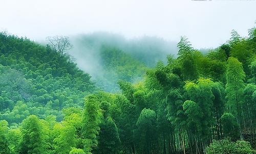 人教版三年级下册语文第一单元作文:家乡的竹林