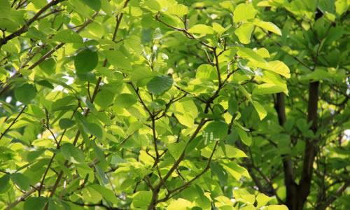 """贺知章的""""碧玉妆成一树高,万条垂下绿丝绦.""""那是飘逸的绿."""