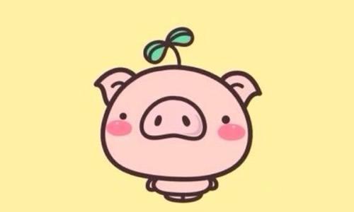 可爱现实小猪头像