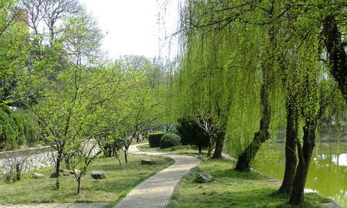 语文s版四年级下册语文第二单元作文:校园的柳树