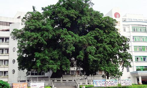 语文s版四年级下册语文第二单元作文:校园的大榕树