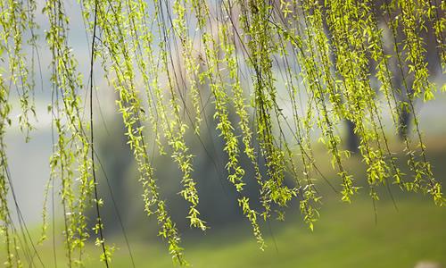 苏教版九年级下册龙虎娱乐国际城第五单元龙虎娱乐app:春风