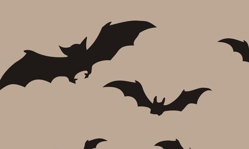 蝙蝠动物作文300字