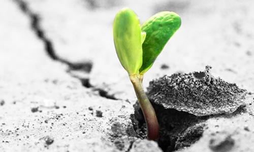 植物生长过程作文