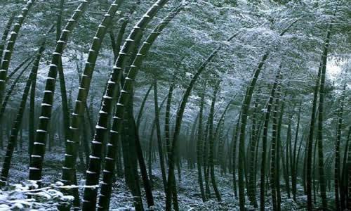 壁纸 风景 植物 桌面 500