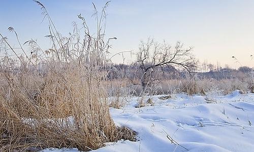 冬天的田园作文800字
