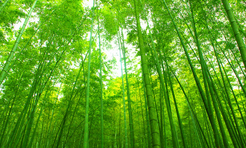海外春天自然风景壁纸图片_海外春天自然风景壁纸
