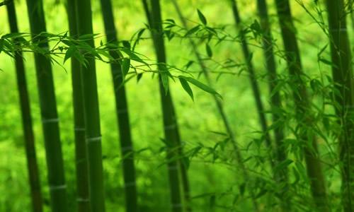怎么用铅笔画竹子