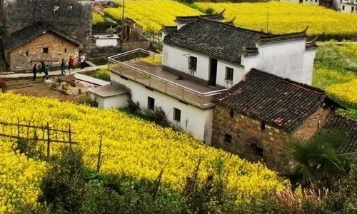农村的风景作文