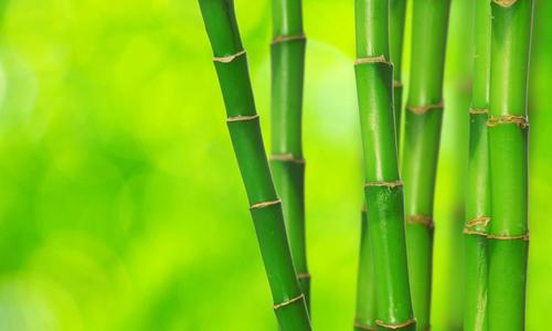 借竹子喻人的作文500字