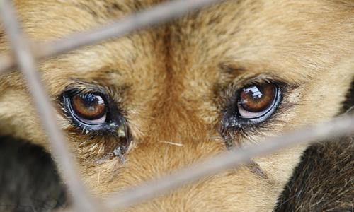 书通网 作文 话题作文 > 动物的眼泪作文   梦的蔓延和对自由的渴望在