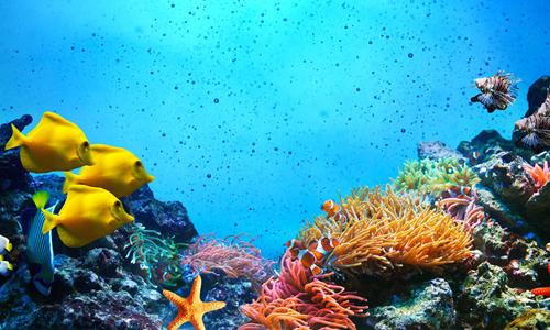 海底世界作文100字