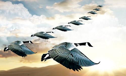 雁的团结就是力量作文