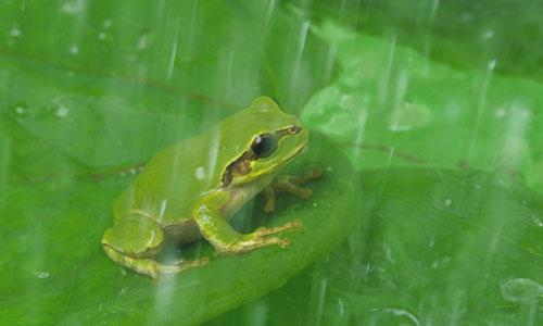 我就赶紧把那只青蛙抓起来,放到奶奶家玩,那只青蛙一路上在我的手掌心