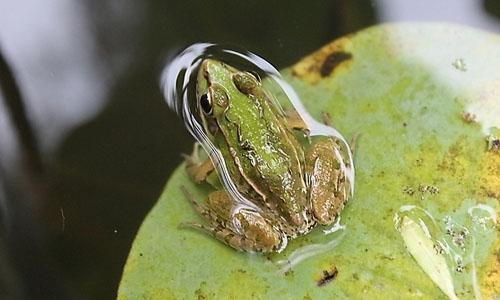 每年青蛙冬天就要进行冬眠