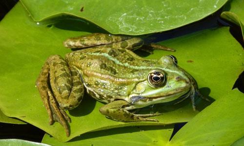 捉青蛙的启示作文350字