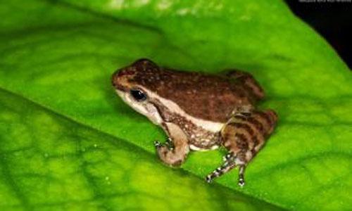 """根据青蛙的眼睛,科学家们发明了""""电子蛙眼"""""""