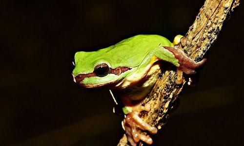 小学生青蛙的自述作文