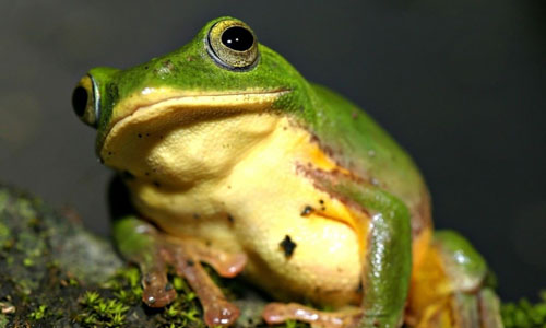 青蛙脚掌简笔画