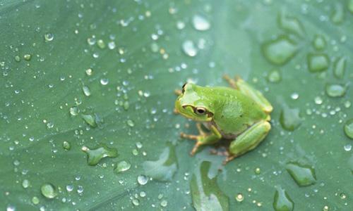 三年级保护青蛙作文