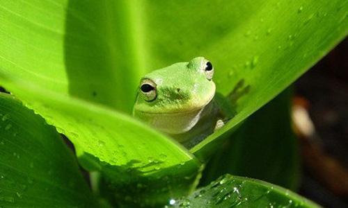 青蛙的启示作文200字