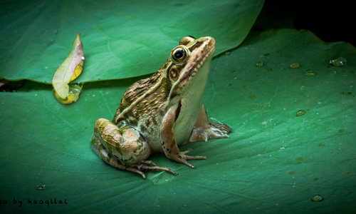 4从青蛙身上得到的启示 动物既是人类的朋友,也是人类的老师,我们