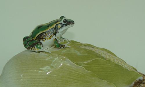 青蛙的启示作文450字