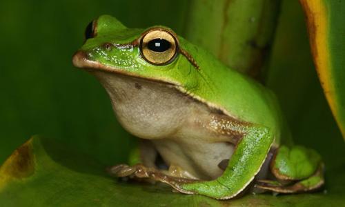 蝌蚪长成青蛙简笔画