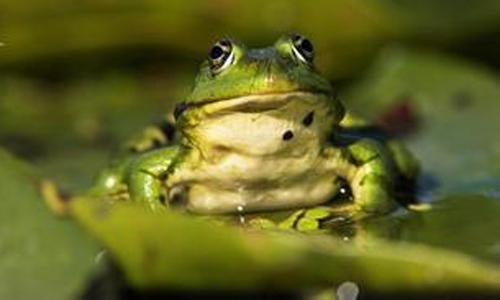 蝌蚪变青蛙作文500字