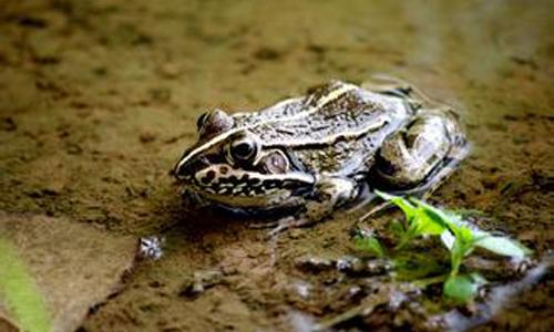保护青蛙二年级作文150字
