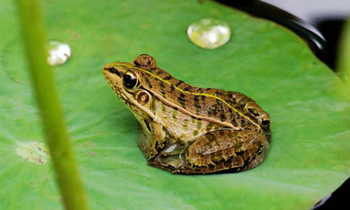 孔雀与青蛙的故事作文