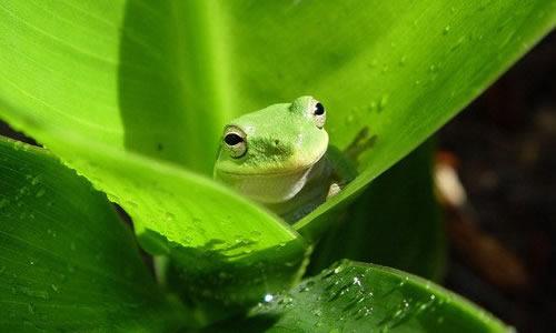 有关青蛙冬眠的作文100字