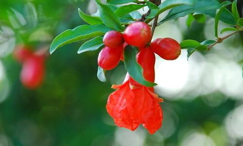蜜蜂在花上采花酿蜜,蝴蝶在花间翩翩起舞.