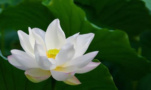 莲花坐风景图片